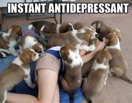 The Best Antidepressant Ever!