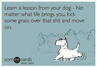 Learn Your Lesson From Your Dog