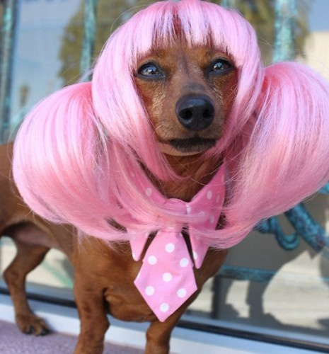 15 Funny Animals in Wigs