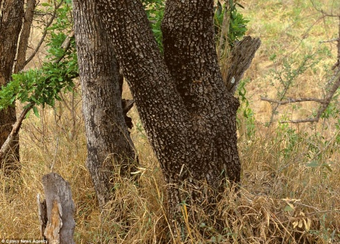 Top-10 Invisible Animals. Try to Find!