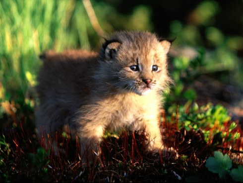 15 Incredibly Cute Baby Animals!