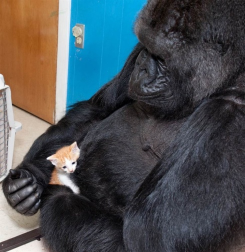 Helpers Among Animals: Are You My Mom?