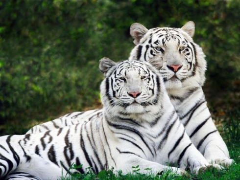 15 Amazing Natural Wonders - Albino Animals!