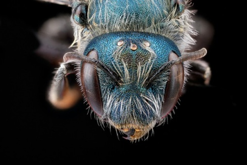 Top-10 Incredible Hairy Insects!