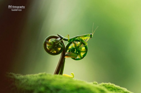 15 Perfectly Captured Photos of Animals!