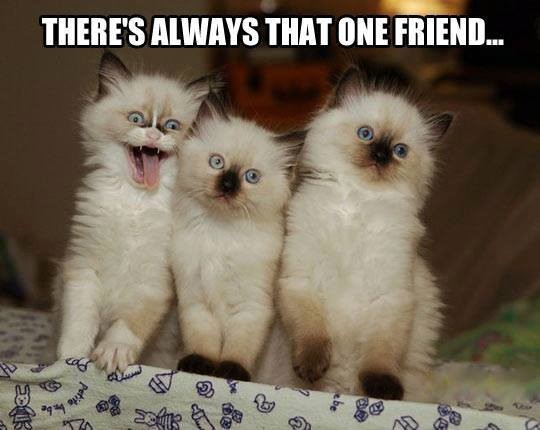That One Friend!