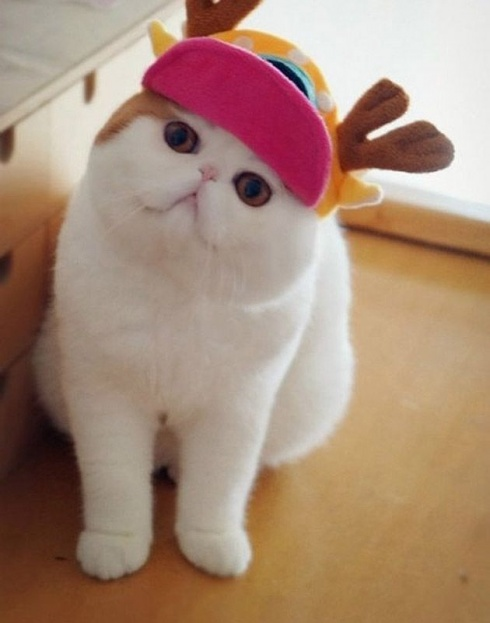 Snoopy Cat And His Awesome Costumes! 10 Pics!