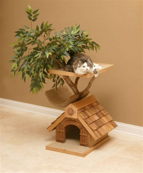 10 Awesome Design Ideas For Cats!