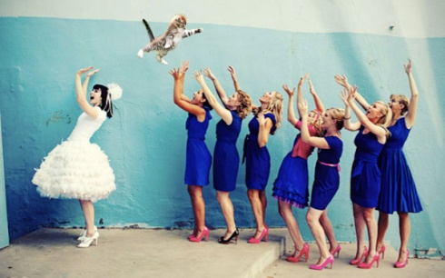 Autumn Wedding Funny Trend: Flying Cats Instead of Wedding Bouquets! 10 Pics!