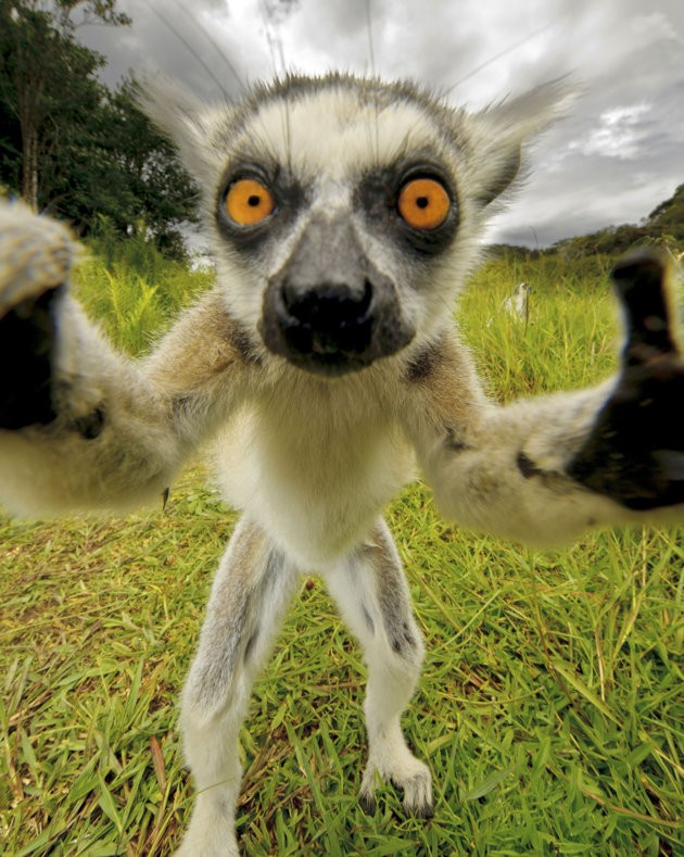 14 Most Hilarious Selfies of Animals Ever Made!