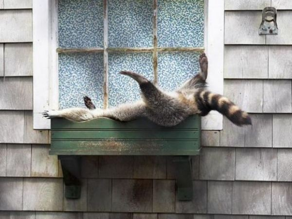 11 Really Tired But Funny Animals!