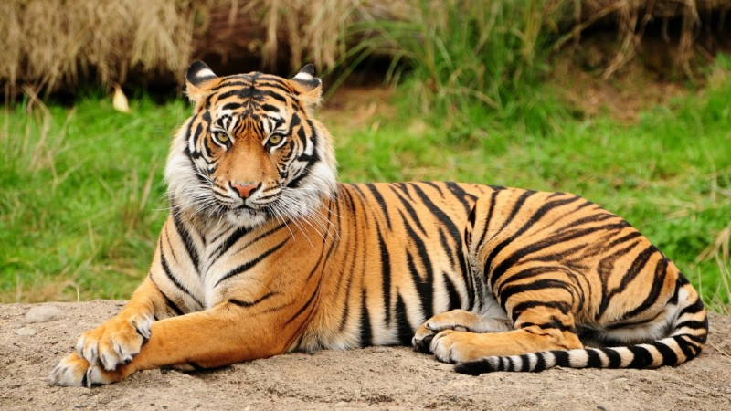 Top 10 Species That Halved in Number in the Last 40 Years!