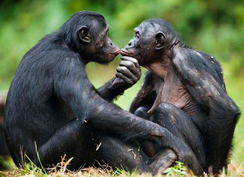 15 Animals Who Can Build Better Relationships Than We Do!