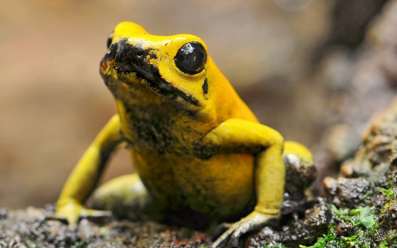 Top 15 Cute but Deadliest Animals in the World!
