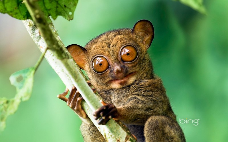 Victims of Imbalances: 10 Animals with Disproportionate Body Parts!