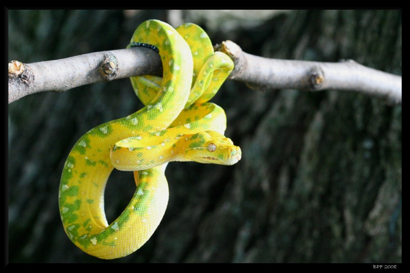 10 Truly Weird But Most Common Myths About Snakes!