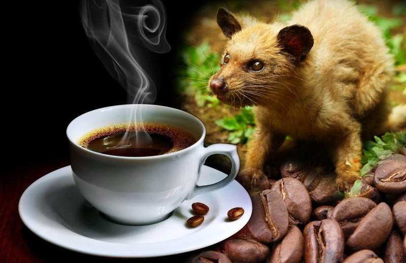 15 Most Bizarre Drinks from Unusual Wild Ingredients!
