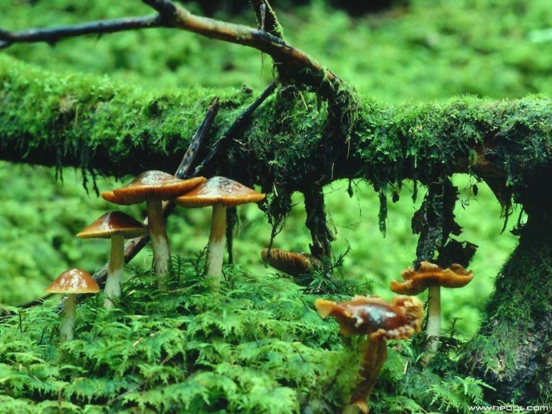 7 Miracles, which Mushrooms are Capable to Perform!