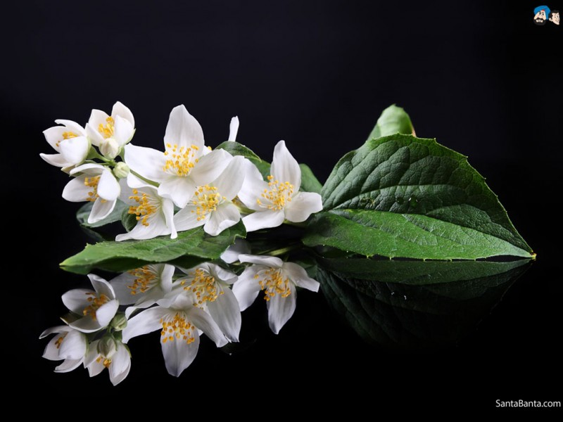 11 Natural Fragrances That Can Change Mood!