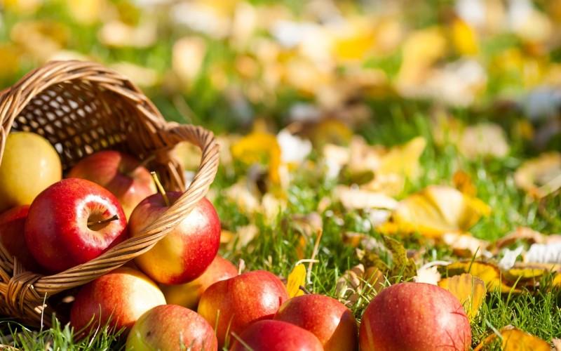 11 Natural Fragrances That Can Change Mood!