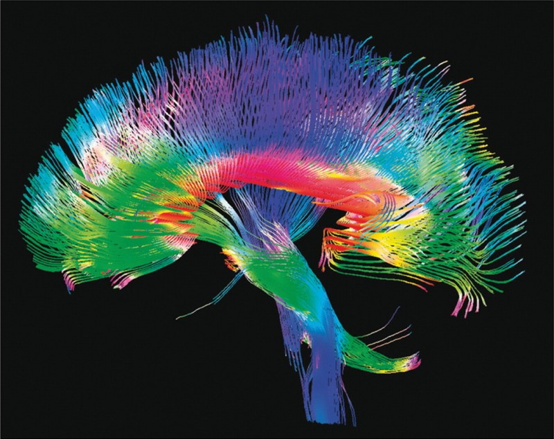 Interesting: 22 Miraculous Facts About Your Brain!