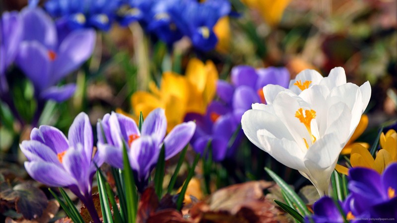 10 Deadly Flowers From All Over the World!