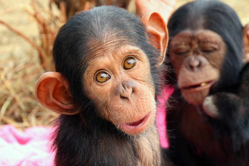 5 Most Intelligent Animals After Man on the Planet!