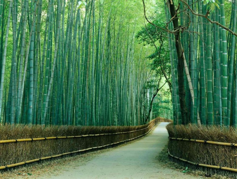 Nature: 10 Amazing Forests of the World!