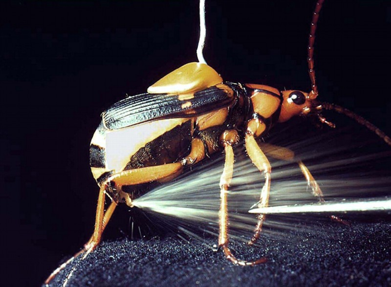 Nature: 10 Insects With Exceptional Abilities!